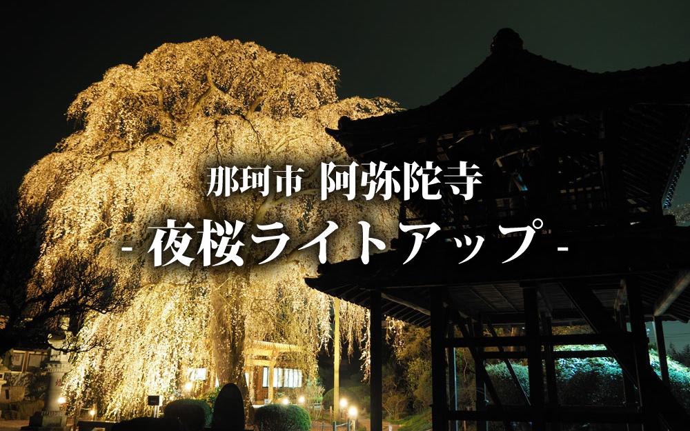 那珂市阿弥陀寺-夜桜ライトアップ-